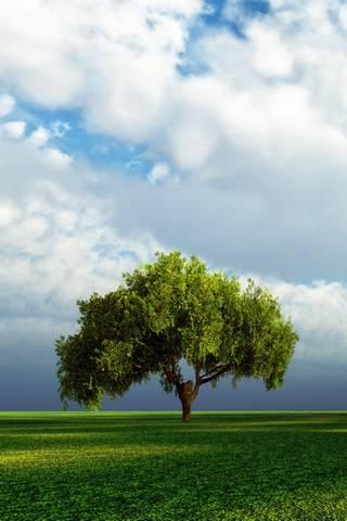 ต้นไม้เดี่ยว