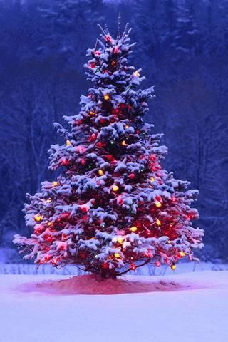 Christas Tree